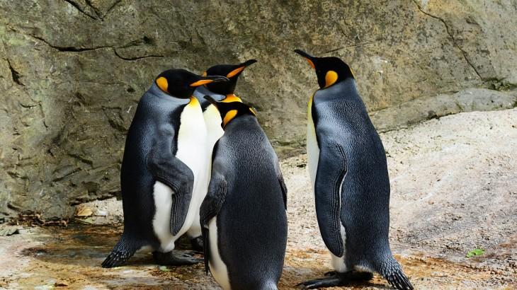 Teamworks, Pinguin Team