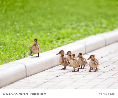 Teamworks GTQ mbH, Ducklings